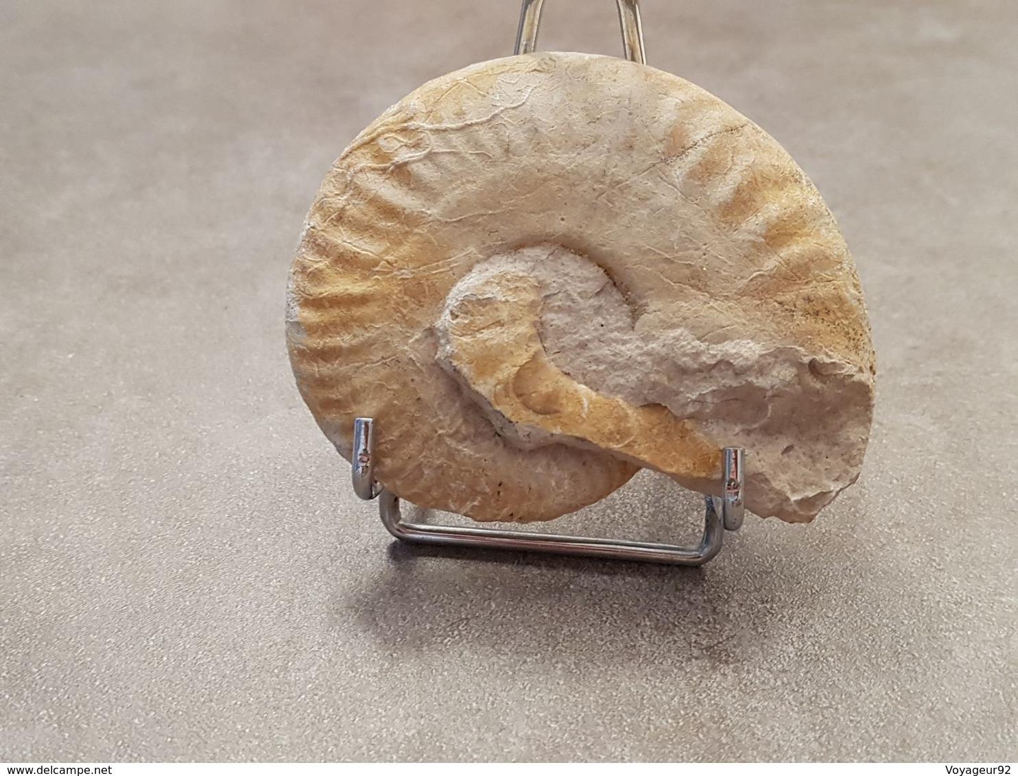 Escargot Fossilisé - Fossils