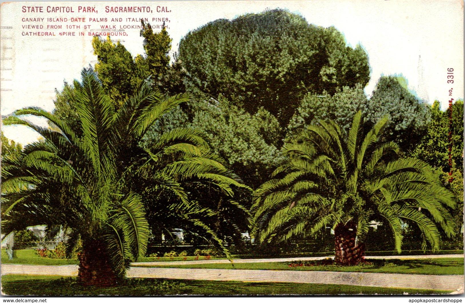 California Sacramento State Capitol Park Canary Island Date Palms and Italian...