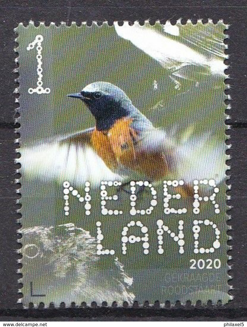 Nederland - 14 September 2020 - Beleef De Natuur - Bos- En Heidevogels - Gekraagde Roodstaart - MNH - Songbirds & Tree Dwellers