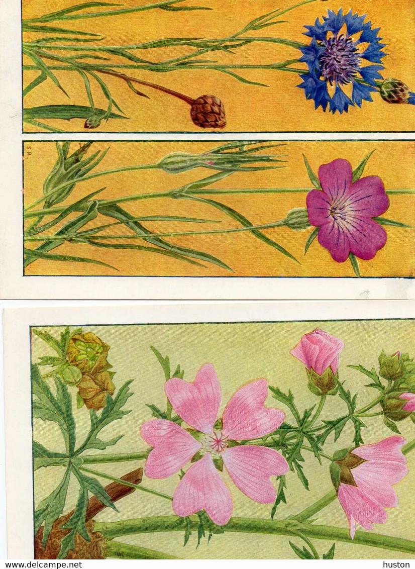 FLEURS DES CHAMPS ET DES PRAIRIES - 15 PLANCHES - CHROMOS - B. Bloemplanten & Bloemen
