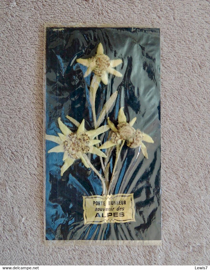 Edelweiss Veritables / Souvenir Des Alpes - B. Bloemplanten & Bloemen
