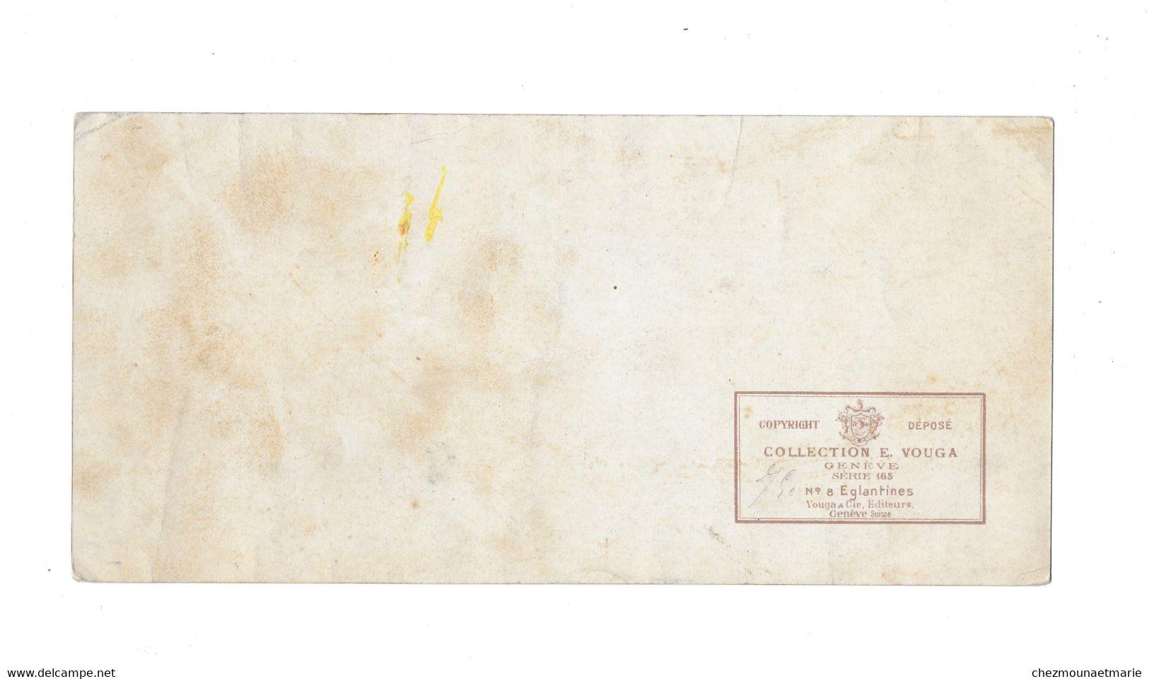 E. VOUGA - GENEVE SERIE 156 N°8 EGLANTINES - GENEVE - CARTE 25*12 CM - B. Bloemplanten & Bloemen