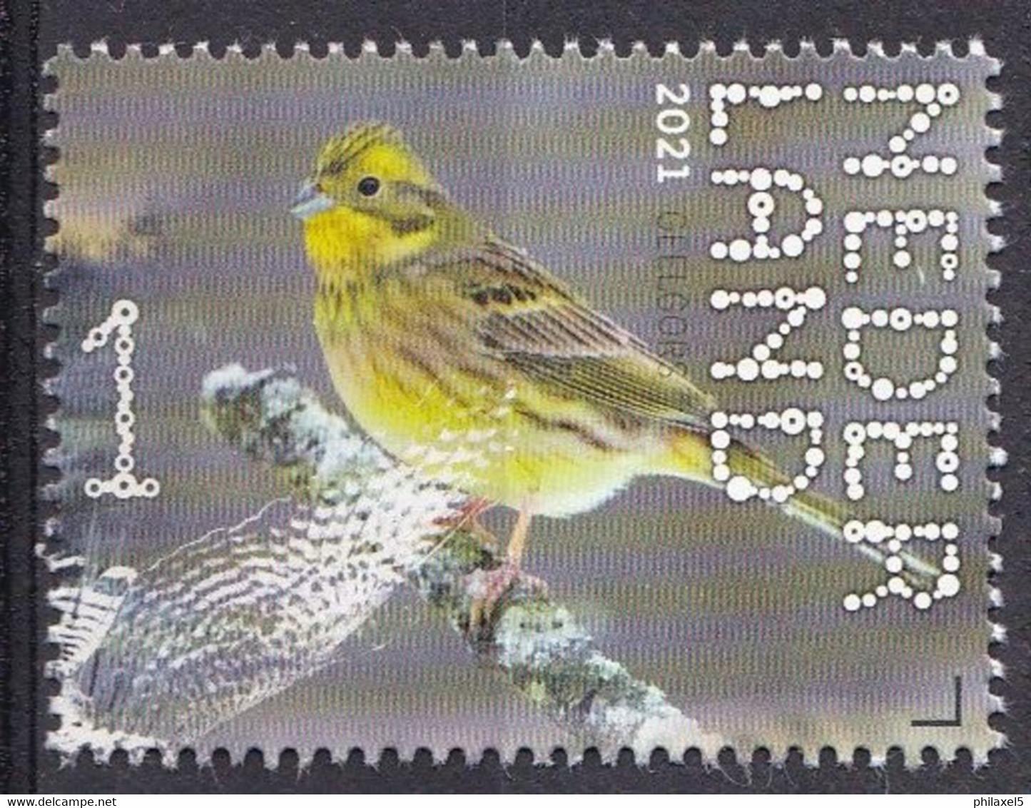 Nederland - Beleef De Natuur - 4 Januari 2021 - Dwingelerveld - Geelgors - MNH - Sperlingsvögel & Singvögel