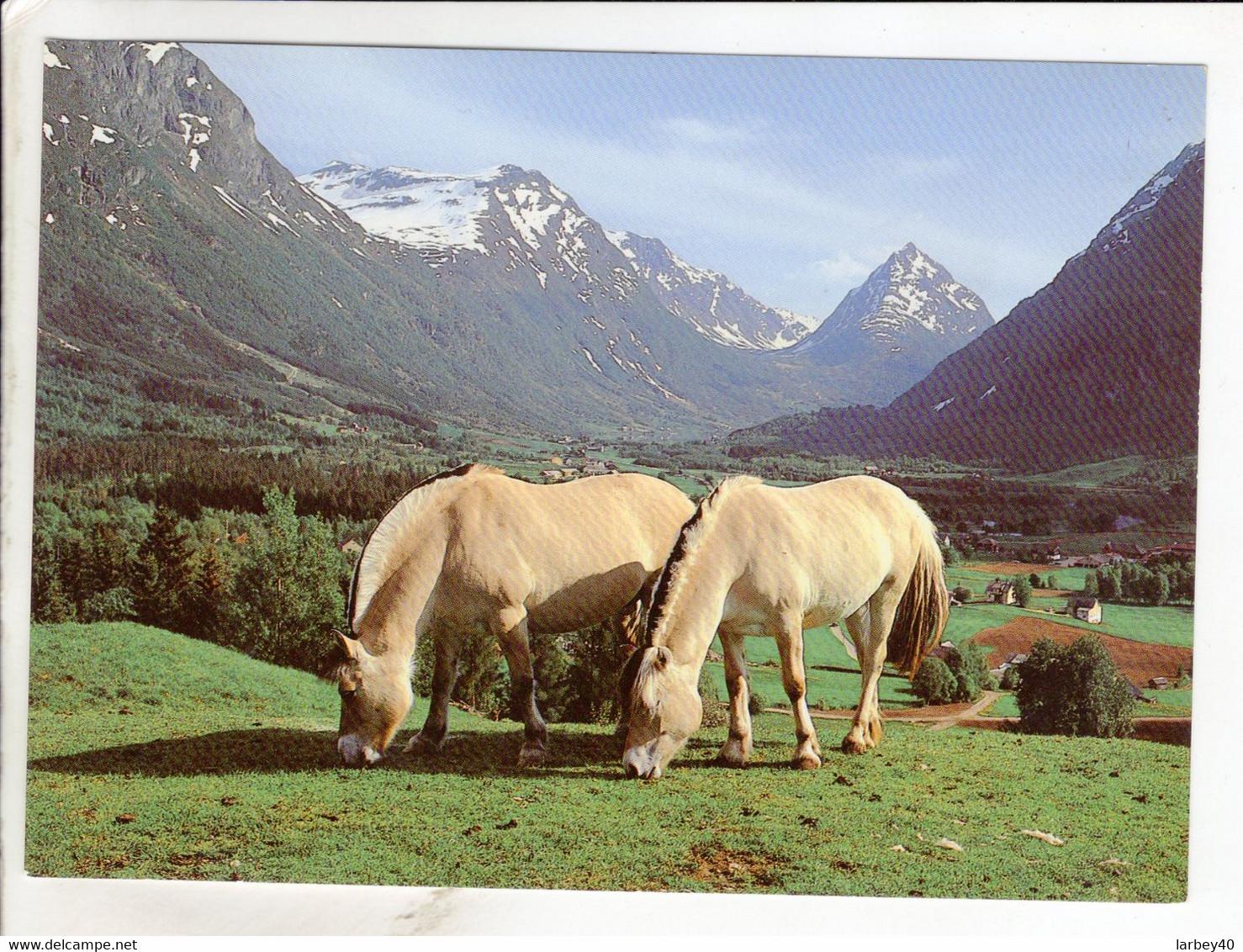 Cp Norway View Of Byrkjelo - Noruega
