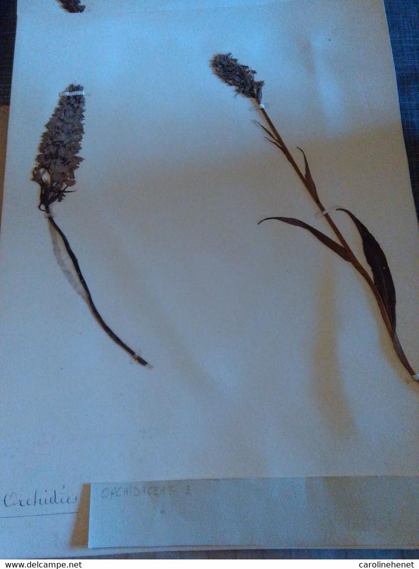 Planches Herbier Orchidaceae - B. Bloemplanten & Bloemen