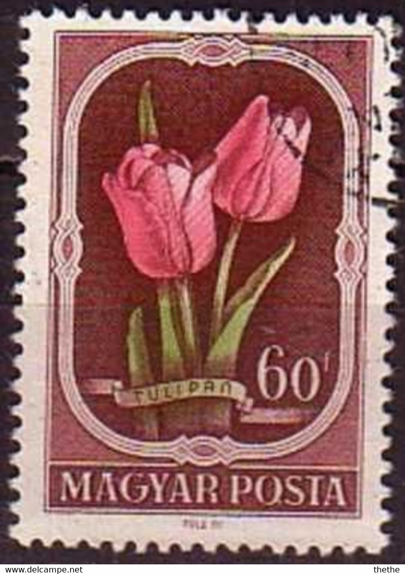 HONGRIE - Tulipes (Tulipa Gesneriana) - Sonstige