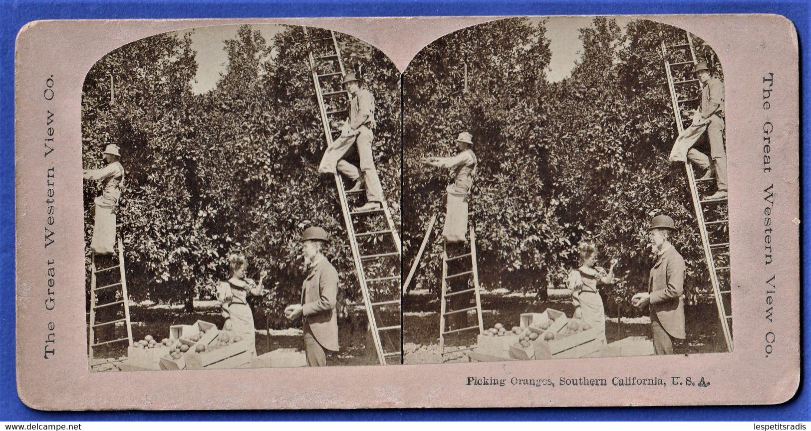 PHOTO STEREOSCOPIQUE, STEREOVIEW - Picking Oranges, Southern California, U.S.A. / Californie, Etats-unis - Photos Stéréoscopiques