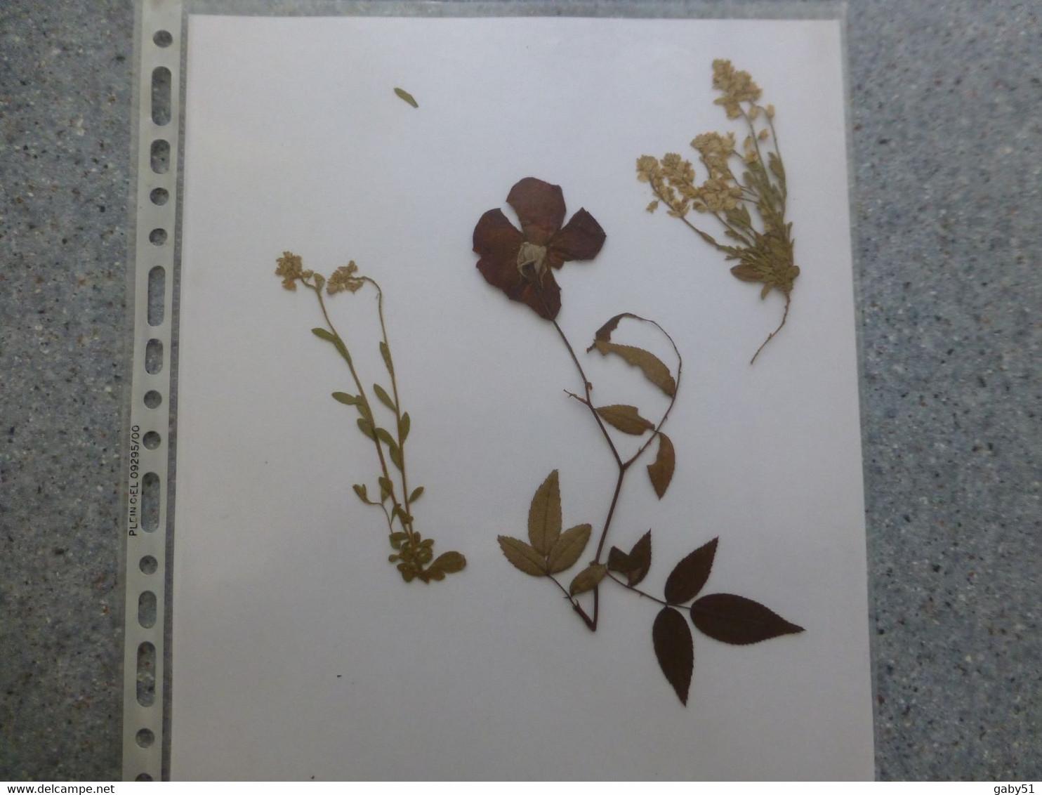 Fleurs Séchées Anciennes (entre 1820 Et 1850 Environ) ; VP 05 - B. Bloemplanten & Bloemen