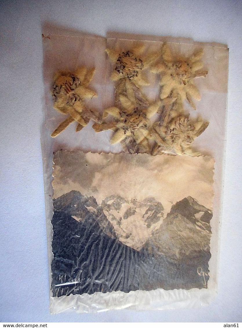 Edelweiss LE GALIBIER VALLOIRES CACHET - B. Bloemplanten & Bloemen