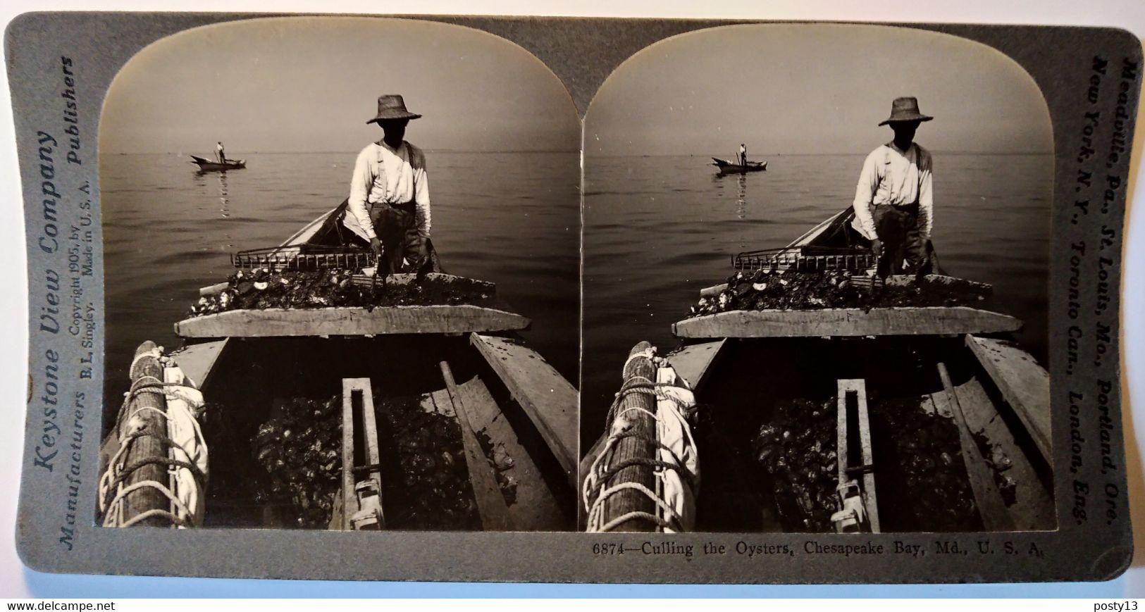PHOTO STÉRÉO USA - Récolte Des Huîtres à Chesapeake Bay - Cliché De Singley 1905 - Ed. Keystone - TBE - Stereoscopio