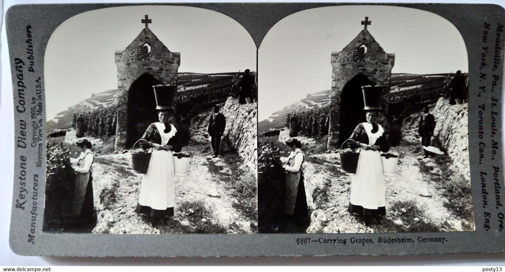 PHOTO STÉRÉO ALLEMAGNE - VENDANGES à RUDESHEIM-am-RHEIM - 1905 -TBE - Stereoscoop