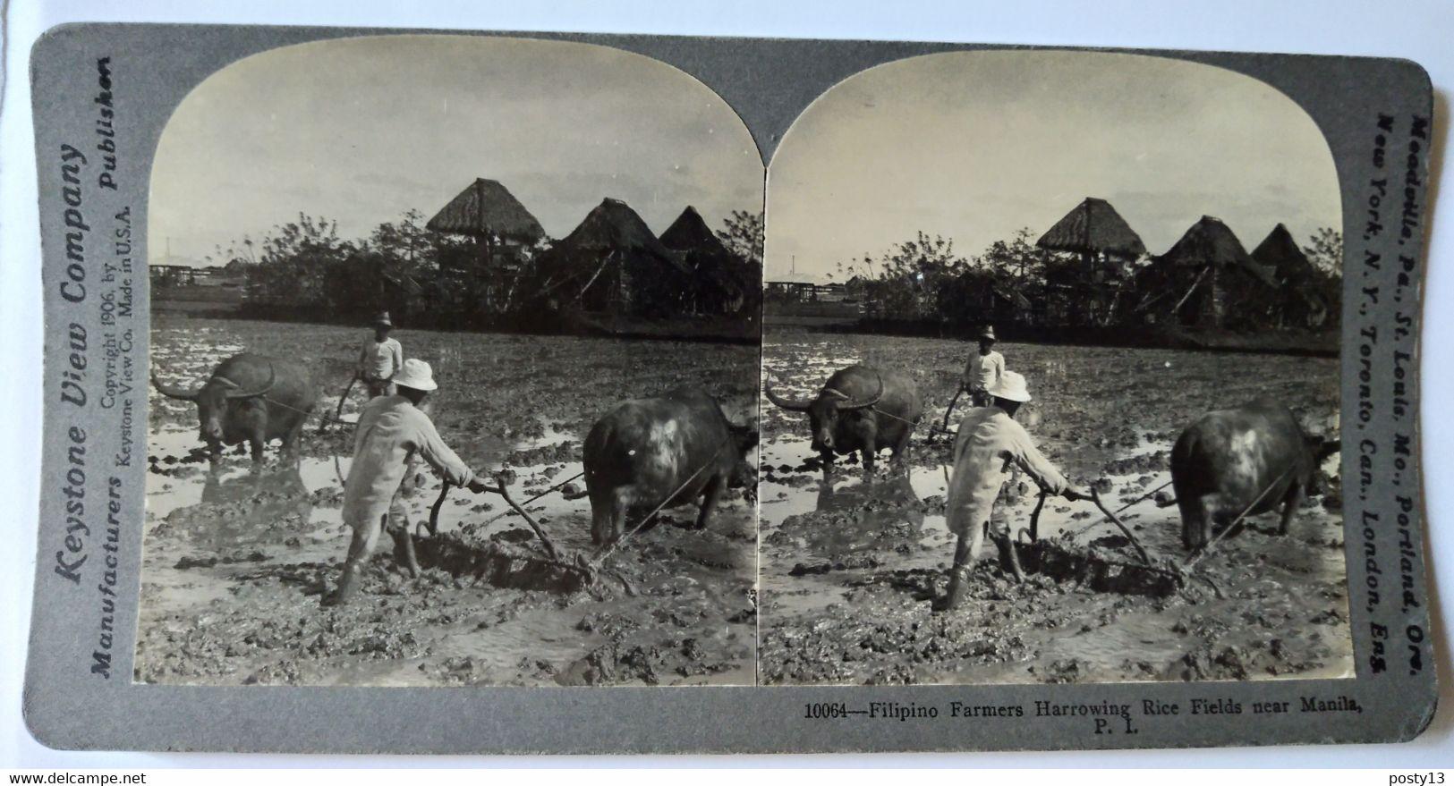 MANILLE - PHOTO STÉRÉOSCOPIQUE - Fermiers Rizières Et Zébus - 1906 - Ed. Keystone TBE - Stereoscopio