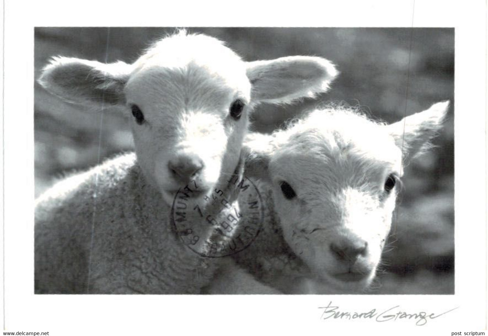 Lot   - Thème - Animaux -  Chèvre Bouquetin Chamois Isard- 68 Cartes - 5 - 99 Postcards