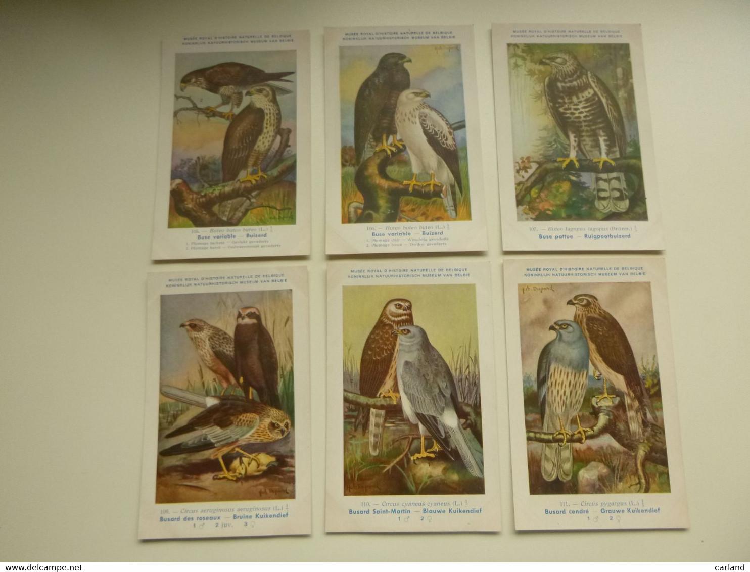 Beau Lot De 9 Cartes De Fantaisie Oiseau  H. Dupond  Oiseaux  Nrs 105 - 113    Mooi Lot Van 9 Postkaarten Vogels  Vogel - 5 - 99 Postales