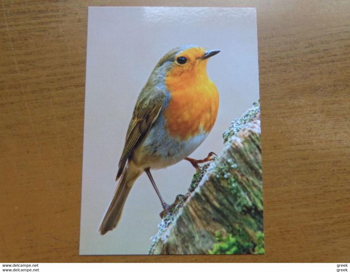 Lot Van 46 Postkaarten Met VOGELS - BIRDS - OISEAUX --> Onbeschreven Kaarten - Zie Foto's - 5 - 99 Postcards