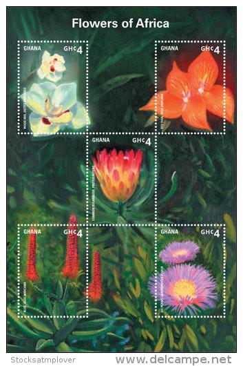 Ghana-2014-Flowers-Flowers Of Africa - Ohne Zuordnung