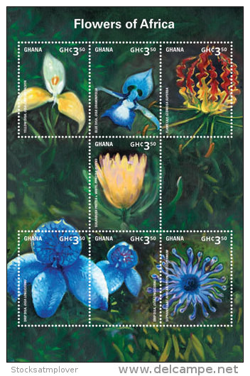 Ghana-2014-Flowers-Flowers Of Africa - Unclassified