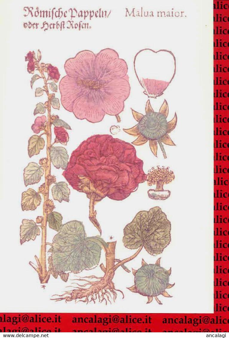 "St.375 - FIORI - 3 Stampe In Cartella: ""Lini Fylueftris Ipecies Maior"" - ""Prunacerea"" - ""Malua Maior"" - - B. Bloemplanten & Bloemen"