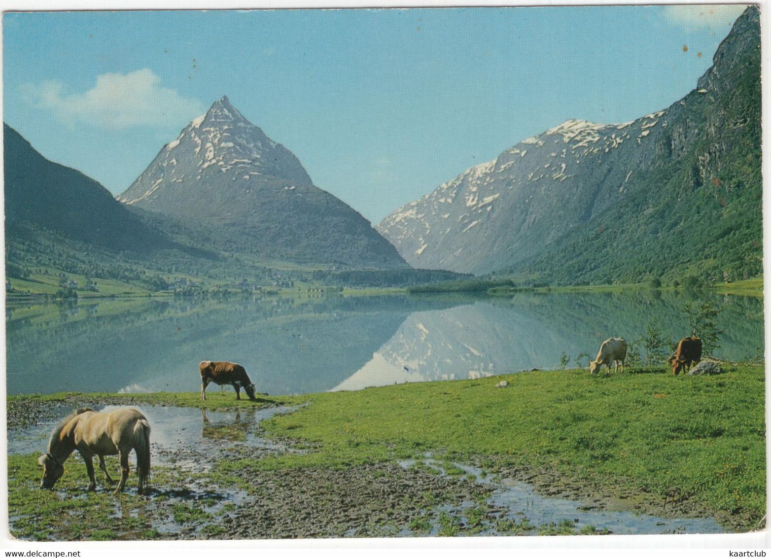 Norge: Parti Fra Byrkjelo, Nordfjord, Mot Eggenipa  - (Norge/Norway) - Horses -  (Normann) - Noruega