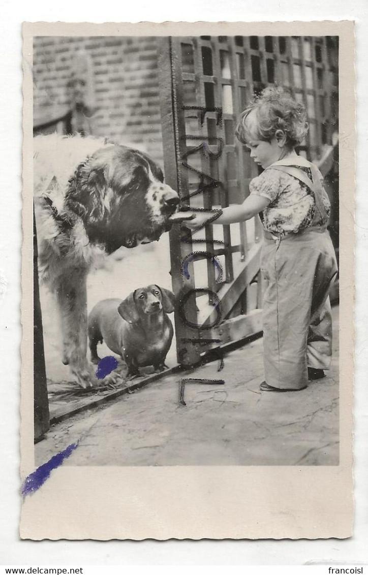 Photographie. Enfant, Chiens (Saint-Bernard Et Teckel) - Dogs