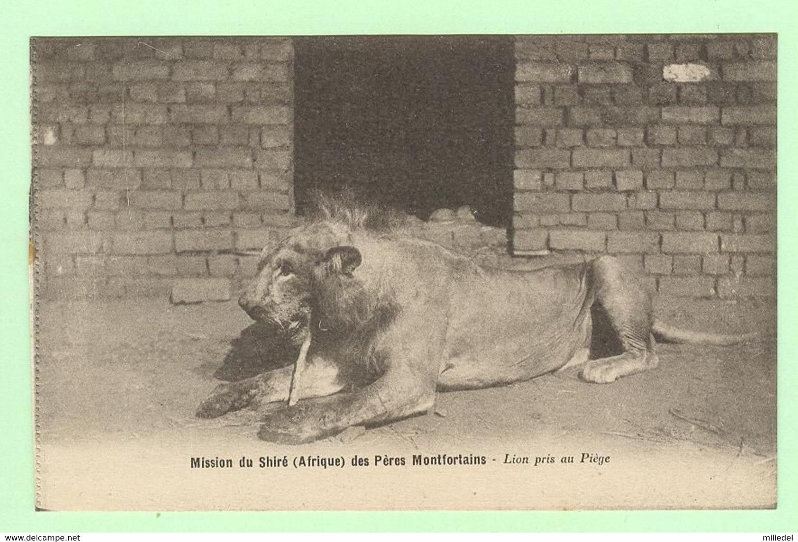 S1139 - AFRIQUE - Mission Du Shiré Des Pères Montfortains - Lions Pris Au Piège - Missions