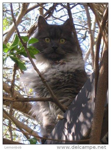 gray_cat