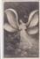 Cartes 1905 SERIE PHOTO REUTLINGER ET JOHN LAURENT / FEMME EN PAPILLON - Entertainers
