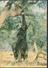 °°° 1665 - ZIMBABWE - ELEPHANT REACHING FOR A TASTY MORSEL - 1989 °°° - Zimbabwe