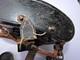 JUMELLES ALLEMANDES DIENTSGLAS Par DDX   - 6 X 30  + ETUI BAKELITE - Direct Grenier !!!!!!!! - Optics