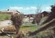 ITALIE---ROVIGO--ROSOLINA MARE--l'entrée.---voir 2 Scans - Rovigo