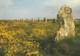 CPM - Dép. 29 - CAMARET ( Finistère) - Les Alignements Préhistoriques De Lagadjar -. Ed. D'Art JOS Le Doaré. N° 9-6417 - Camaret-sur-Mer