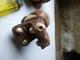 2 Hippopotames Sculptés En Bois - Art Africain