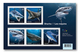 = SHARKS In Canadian Waters = HAIFISCH = REQUIN = Tiburón = SQUALO = Predators = Souvenir Sheet 5 Stamps MNH Canada 2018 - Fishes