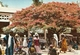 "2591 "" L'AFRIQUE EN COLEURS-MARCHANDES ACUS UN FLAMBOYANT "" CARTOLINA POSTALE ORIGINALE SPEDITA - Uganda"