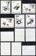 1973 - Panda, Complete Set (M.1126/1131), O. G., MNH.... - China