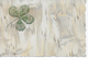 1 CPA  Bonne Année 1900 Trèfle à 4 Feuilles Un Mot écrit En Doré Sur Chaque Feuille - Relief - 1000 / Bons / Sou / Haits - Nouvel An