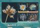 Thematik: Tiere-Meerestiere / Animals-sea Animals: 2010, BRITISH ANTARCTIC TERRITORY: International - Maritiem Leven