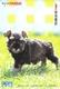CHIEN - DOG - Carte Prépayée Japon - Dogs