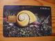 Phonecard Cuba - Snail - Cuba