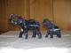 Varia (im Briefmarkenkatalog): EDELSTEIN-ELEFANTEN: Unglaubliche Sammlung Von 122 Herrlichen Elefant - Non Classificati