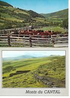 PHI 2863 // LOT 2 Cartes VACHES  PATURAGES MONTS D'AUVERGNE & Monts Du Cantal Offre - Vaches
