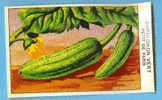 ETIQUETTE CORNICHON VERT PETIT DE PARIS - Frutta E Verdura