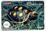 Turtle - Schildpad - Sea Turtle – Tortoise – Schildkroete – Tartaruga – Tortue (286)
