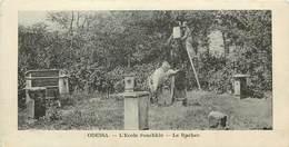 Ukraine - Apiculture - N222 - Odessa - Odecca - L´Ecole Pouchkin - Le Rucher - Bon état - Ukraine