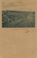 Tabaksveld In Deli Plantation De Tabac Timbrée Weltevreden 1902 Tobacco - Indonesia