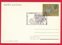 SC Poland Postcard Special Cancellation - SPORT - 027 RUN THROUGH FOREST - Ganzsachen