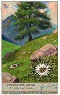 1335 Fleurs Des Alpes2 - ALPENBLOEMEN   Alpenflora -Liebig 6 Chromos Serie, Avoid Sending-cost &  Get Discount Edelweis - Liebig