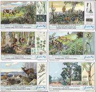 1352 Défense Des Plantes Contre Les Herbivores   -  ZELFVERDEDIGING DER PLANTEN TEGEN DE PLANTENETERS - 6 Chromos LIEBIG - Liebig