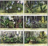 1568 Fleurs Des Bois  - BOSBLOEMEN - FORET ) Liebig Serie  –  Liebig Serie  –  Read Description & Get Discount Up To 50% - Liebig
