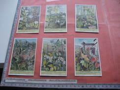 1624 Plantes Grimpantes  - KLIM- EN SLINGERPLANTEN  - Liebig Serie  –  Read Description & Get Discount Up To 50% - Liebig